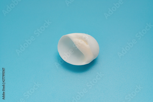 white color conch shell on a blue background Wallpaper Mural