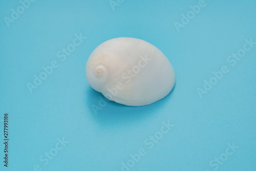 Canvas Print white color conch shell on a blue background