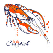 Ink Hand Drawn Crayfish Concept For Decoration Or Design. Ink Spattered Crawfish Illustration. Vector Red Boiled Lobster Drawn In Ink. Seafood Concept With Color Splashes On White With Place For Text