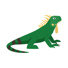 Isolated Object Of Iguana And Lizard Icon. Set Of Iguana And Colorful Vector Icon For Stock.