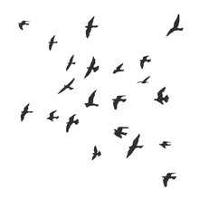 Silhouette Of A Flock Of Flyin...