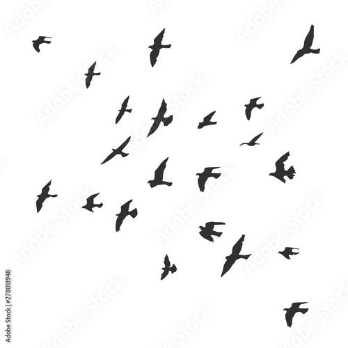 Cuadros en Lienzo silhouette of a flock of flying birds
