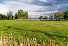 Nature Scenery With Grassy Field Trees Lake And Mountain View On A Sunny Day