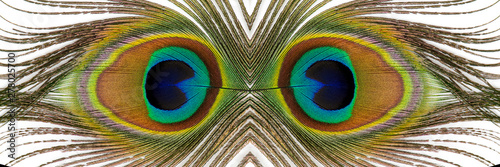 Cadres-photo bureau Paon Beautiful exotic peacock feathers on white background. Close up