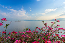 "Purple Bougainvillea Flowers With Sunshine On Lake Or Large Swamp And Mountains And Blue Dramatic Sky With Cloud At Sunset At ""Kwan Phayao"" In Phayao Province, Northern Thailand."