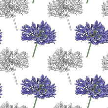 Pattern Of Inflorescences Of White And Purple Flowers