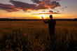 Silhouette of a man doing fingers gesture ok to sunset on the wheat field.