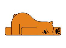 Sleeping Bear Isolated. Beast Is Sleeping. Vector Illustration