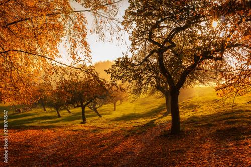 Canvas Prints Chocolate brown Sonnenuntergang in Kandern im Wald