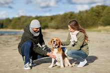 Pet, Domestic Animal And People Concept - Happy Couple With Beagle Dog On Autumn Beach