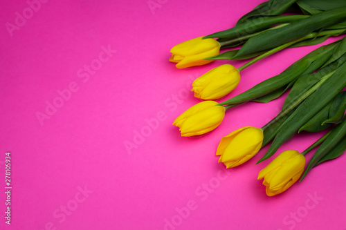 Poster Rose tulips in a field of tulips. Bright tulips. Beautiful tulips in spring time. Colorful tulips flower in the garden. Beautiful tulips on a pink background. copy space