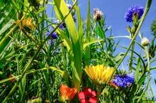 Ackerstreifen Mit Verschiedenen Blumen, Die Blühen
