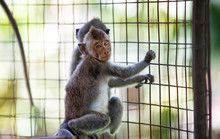Two Young Monkeys At Cage