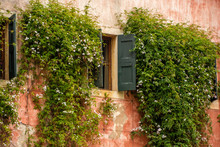 Ivy Covered Windows