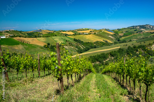 Photo Abruzzo Vineyards