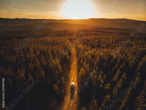 Foto auf AluDibond Schokobraun Four wheel drive driving through pine forest near Taradale & Laurel Hill, Snowy Mountains, New South Wales