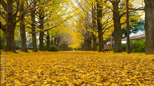 Foto auf AluDibond Honig Row of yellow ginkgo tree in autumn. Autumn park in Tokyo,