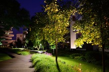 Ornamental Shrubs And Plants Near A Residential City House At Night