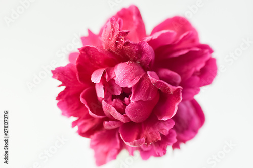Fotografía Red peony flower in a glass vase on a white isolated background