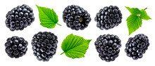 Ripe Blackberry Isolated On White Background Closeup