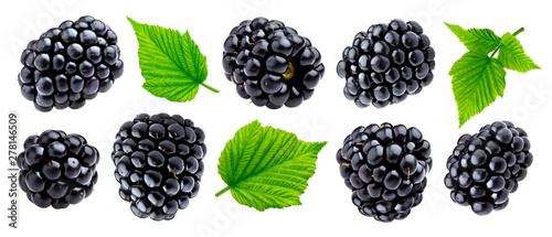 Fototapeta Ripe blackberry isolated on white background closeup obraz