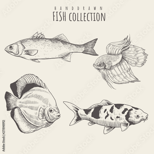 Valokuva  Collection of fish hand drawn with contour lines on white background