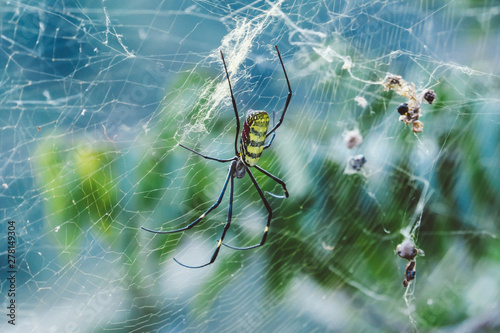 Deadly Yellow And Black Colored Spider Waiting For It S Pray
