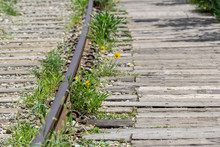 Yellow Daisy Railroad