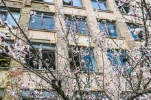Beautiful Blossoming Apple Tre...