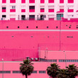 Leinwandbild Motiv Palm. Canary Island. Plants on pink concept art
