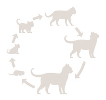 Round Stages Of Cat Growth Silhouette Set. From Kitten To Adult Cat. Animal Pets. Pussy Grow Up Animation Progression. Circle Pet Life Cycle. Vector Illustration.