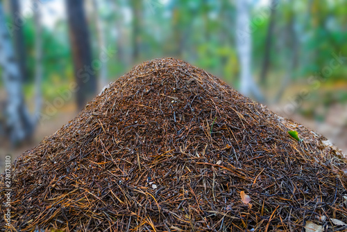 Photo closeup huge anthill in a forest, wildlife natural background