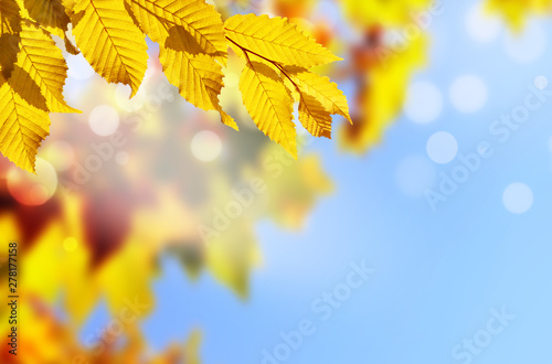 obraz dibond Autumn background. Yellow leaf in autumn park on a blurred sky background