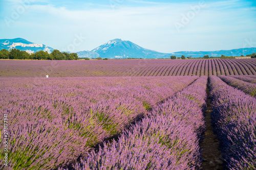 Photo sur Toile Lavande Lavender fields and mountains in the distance in Valensole, Alpes-de-Haute-Provence/France. / General View