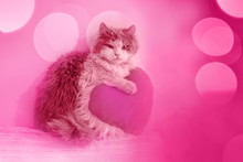 Cat With Toy Heart With  Pink Effect. Gray Kitten Holds Red Heart