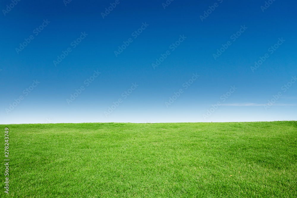 Fototapety, obrazy: Green Grass Texture with Blang Copyspace Against Blue Sky
