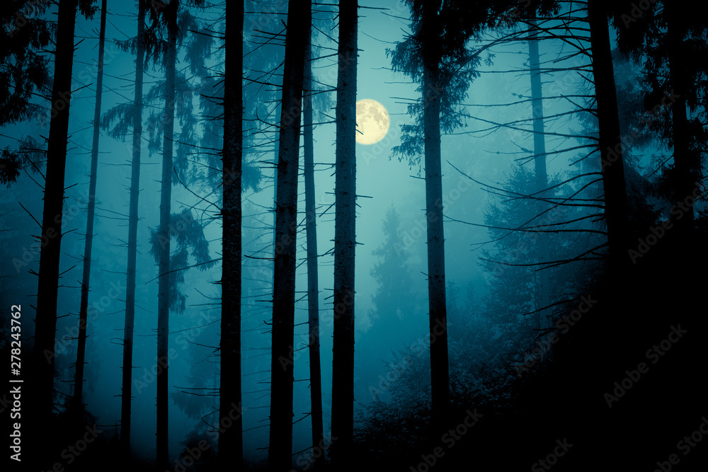 Fototapety, obrazy: Full moon through the spruce trees in magic mystery night forest. Halloween backdrop.