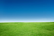 Green Grass Texture with Blang Copyspace Against Blue Sky