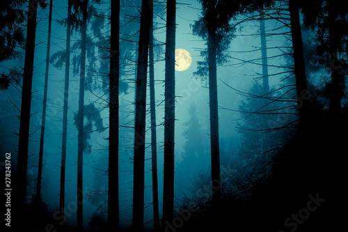 Full moon through the spruce trees in magic mystery night forest Wallpaper Mural