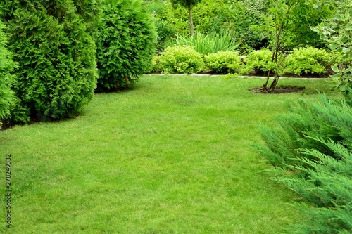Fotobehang Pistache Green mowed lawn in the garden surrounded by coniferous trees