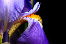 Extreme Close Up Shot Of Iris ...
