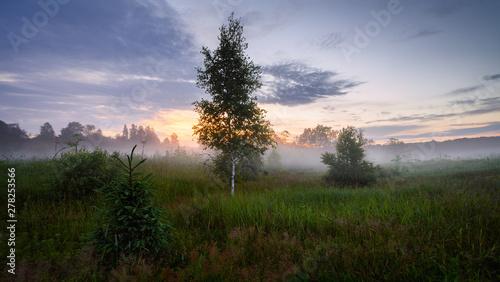 Foto auf Gartenposter Blau Evening landscape in a wild field with fog