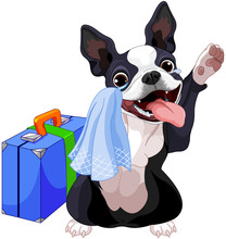 Boston Terrier With A Suitcase