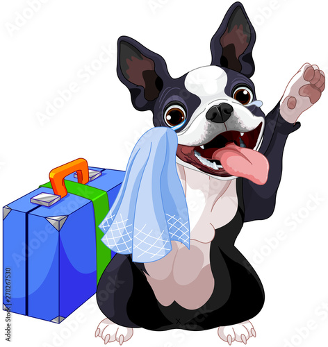 Poster Sprookjeswereld Boston Terrier With A Suitcase