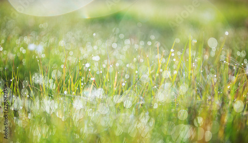Obraz Close-up view of dew on the fresh green grass in the morning, macro shot. - fototapety do salonu