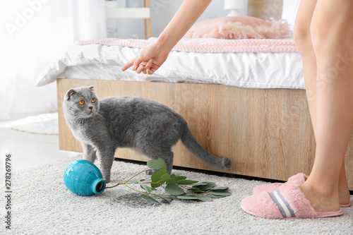 Owner scolding her cat for dropped vase on carpet Canvas
