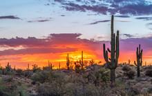 Fiery Desert Sunrise In Brown ...
