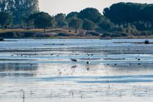 Several Birds Including Storks...