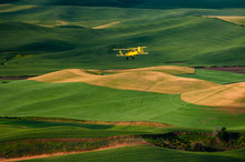 Yellow Biplane Crop Duster Flying Over Farmlands. A Crop Duster Works The Wheat And Lentil Fields Of The Palouse Area Of Eastern Washington State Near Steptoe Butte State Park.