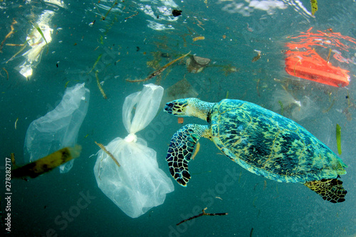 Obraz Plastic pollution in ocean environmental problem. Turtles can eat plastic bags mistaking them for jellyfish - fototapety do salonu